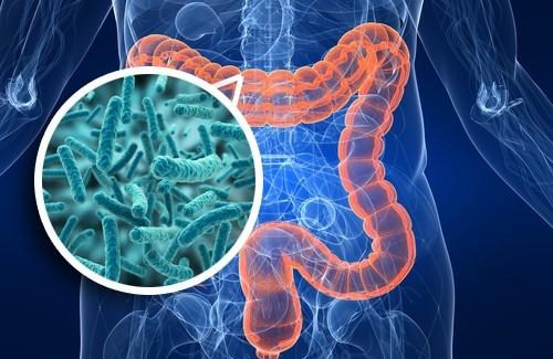 Cancro del colon-retto: l'importanza del microbiota per l'attivazione del sistema immunitario